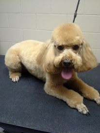 Designate a Place for Grooming Your Pet at Home