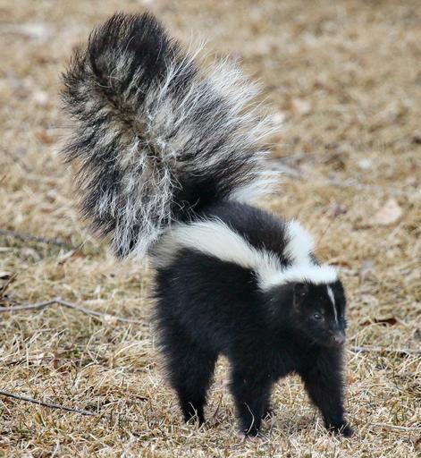 How to Remove Skunk Smell from a Dog In 5 Easy Steps